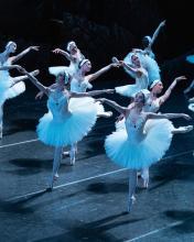 Zwanenmeer Het Nationale Ballet