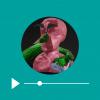 Missa podcast