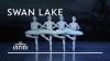 Dance of the Little Swans - Swan Lake